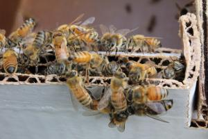 Nuc Bee Close Up